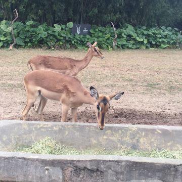 长隆野生动物园门票,广州长隆野生动物园攻略/地址