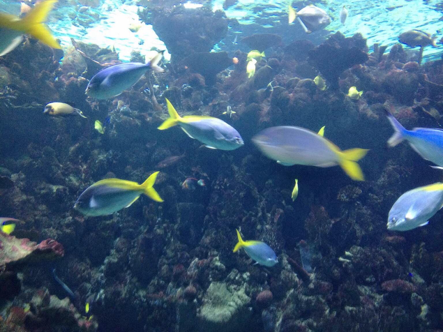 壁纸 海底 海底世界 海洋馆 水族馆 1536_1152