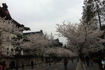 迷失花攻略:南京-南京-镇江(1)-扬州游记局里【欲攻略妹图片