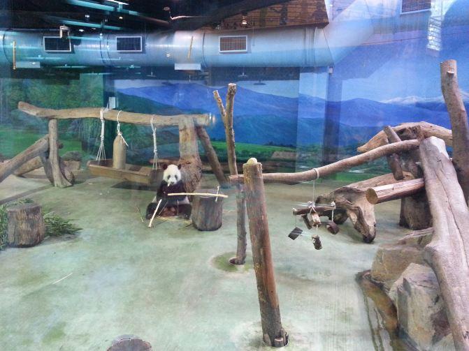 台北市立动物园熊猫馆