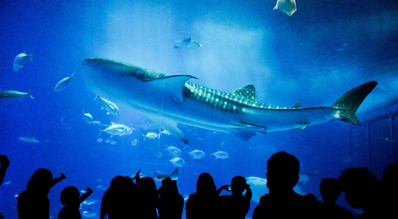 壁纸 海底 海底世界 海洋馆 水族馆 1600_883