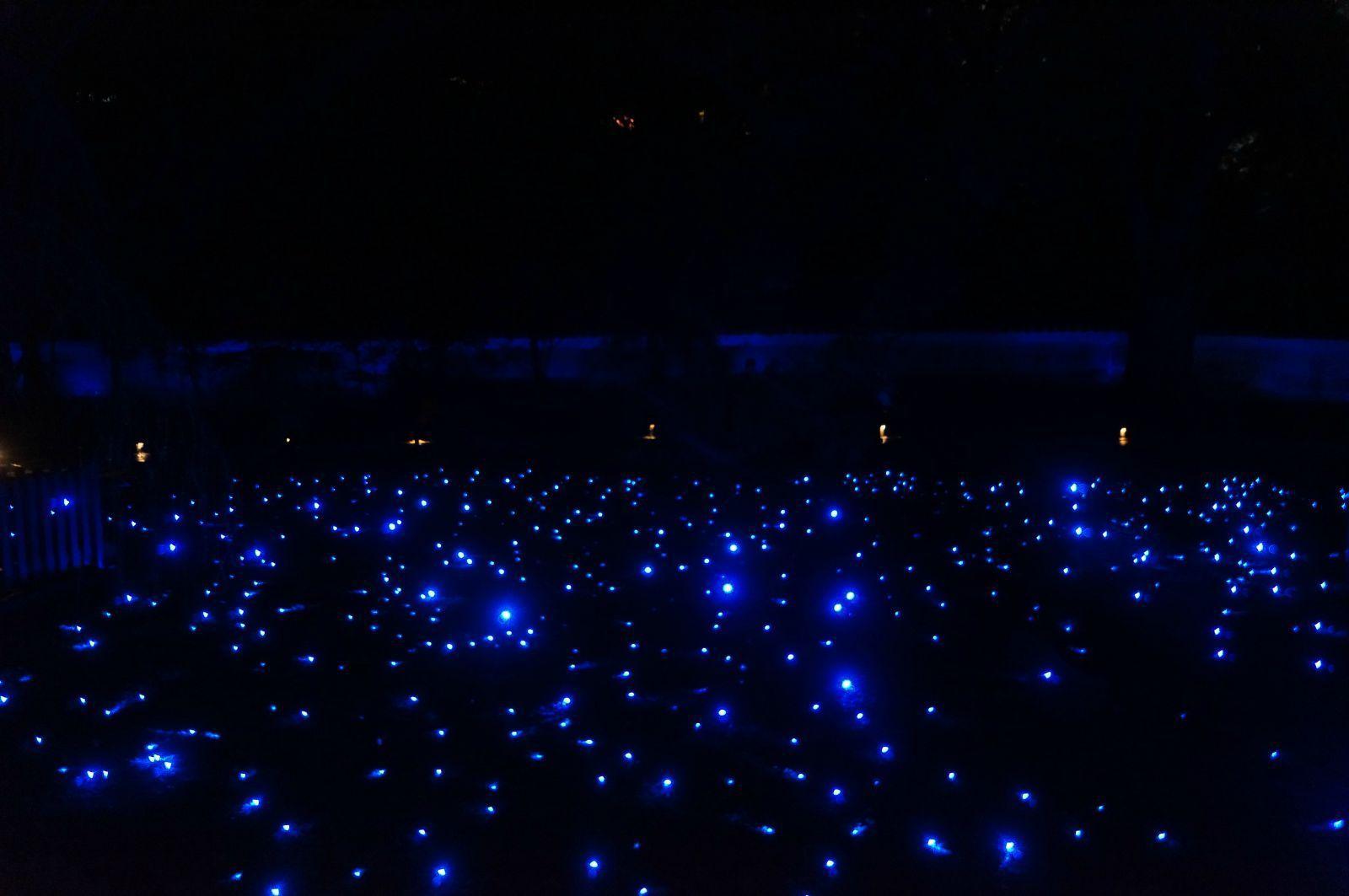 青莲院虽不大,夜枫特色在于庭院里变幻的led灯光组合,每一刻看到的