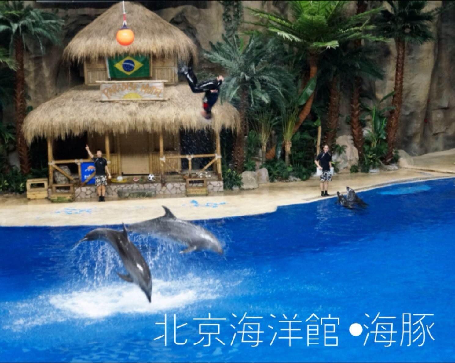 day4:北京动物园,北京海洋馆