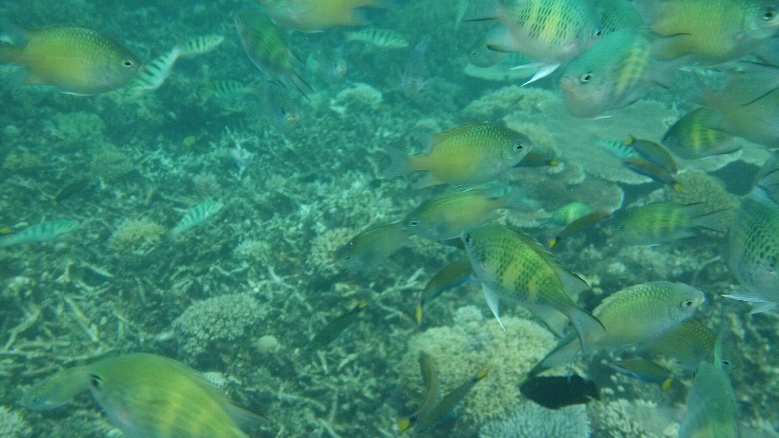 壁纸 海底 海底世界 海洋馆 水族馆 1600_900