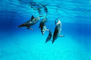 水雾魔珠图案海豚