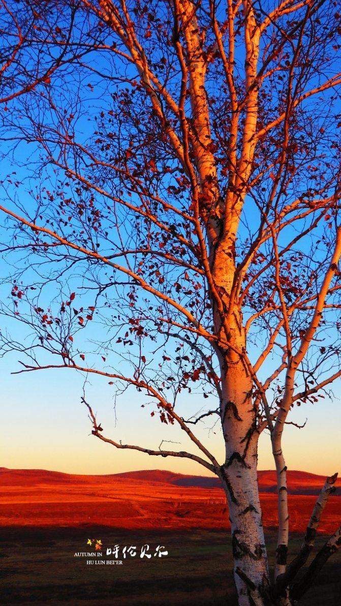 上坡上白桦树,背后就是太阳即将升起的地方,地面上都已经能看到点点