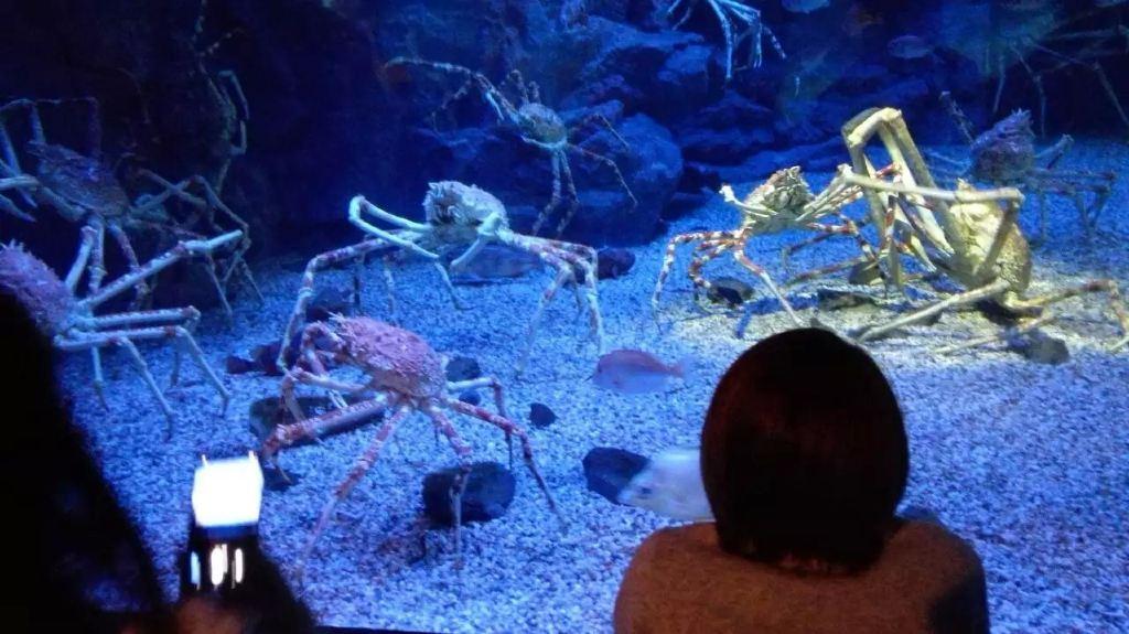壁纸 海底 海底世界 海洋馆 水族馆 桌面 1024_575