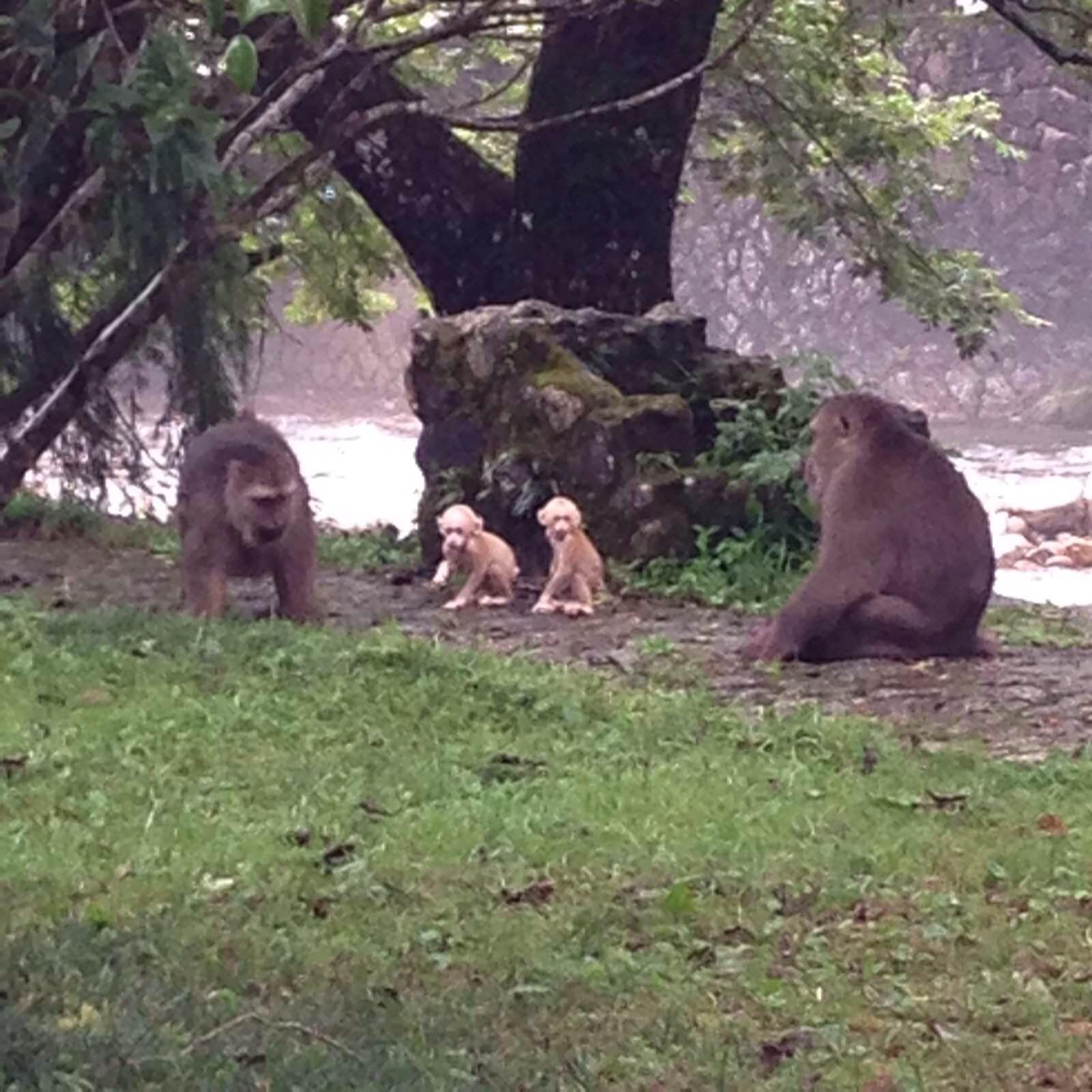 一家人游武夷山