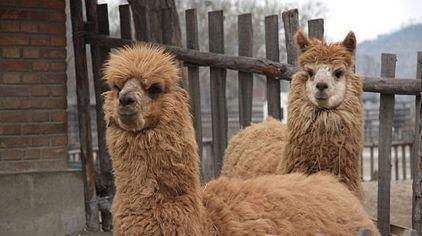 天津动物园集野生动物异地保护