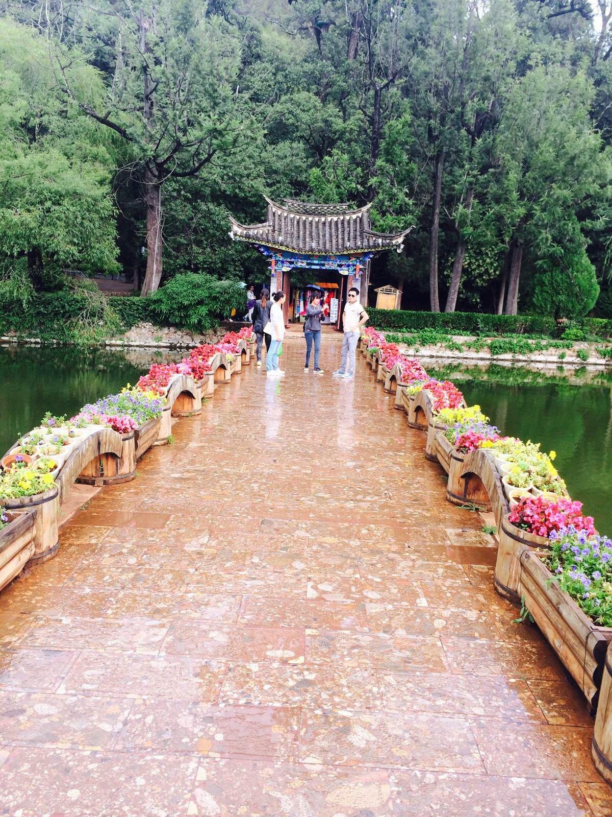 丽江小松树森林公园