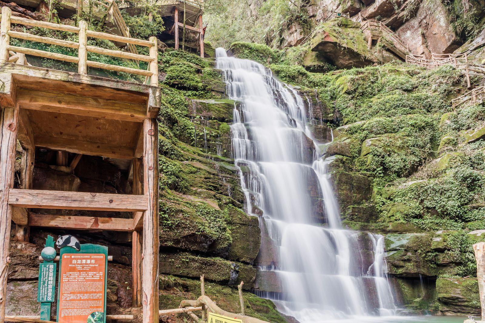 雅安2日1晚跟团游·碧峰峡植物园+生态动物园+上里