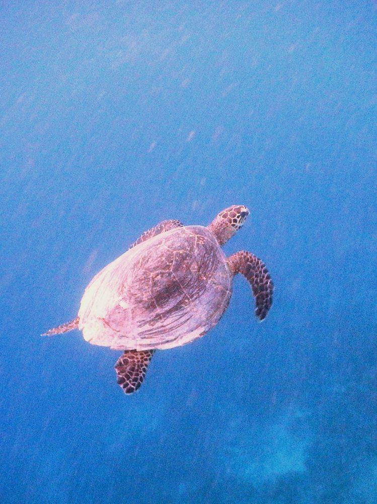 吉利群岛是极佳的潜水圣地,因为这里的海洋生物数量众多,品种多样。海龟、黑鳍鲨和白鳍鲨常见,还有很棒的(小种群)大型生物,比如海马、尖嘴鱼和众多甲克类动物。这里的珊瑚一直都处于原生状态由珊瑚礁环绕,且拥有可轻易到达的海滩,吉利群岛同样提供了极好的浮潜条件。关于海,我总觉得什么介绍都是很多余的,你只要投身大海,做你想做的,当你躺在海平面上仰望天空时整个世界就都属于你了,我在岛上的时间有限,跳岛游是不错的选择,三个小岛风情各异,轻松的浮浅可以和海洋生物亲密接触,共享美好时光。我总是这样爱海,以至于我总
