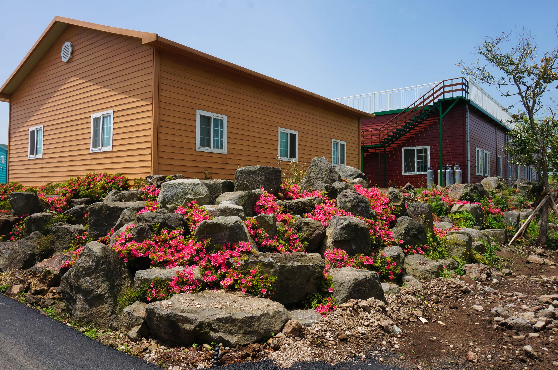 五月的济州岛,杜鹃花开得正盛