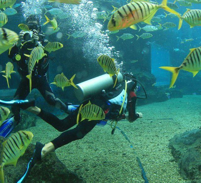 壁纸 海底 海底世界 海洋馆 水族馆 桌面 640_583