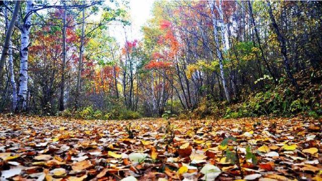 保存最为完整的天然白桦林,是距离首都北京最近的国家森林公园.