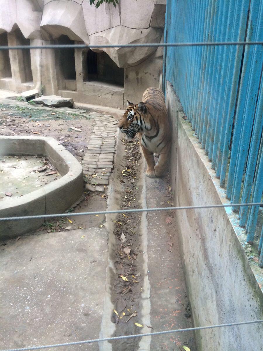 宜昌动物园