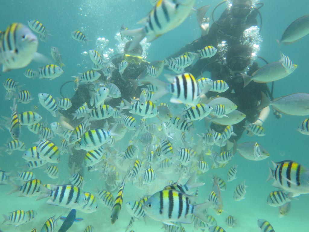 海底世界真的很美,能见到海星,珊瑚,热带鱼等等生物.