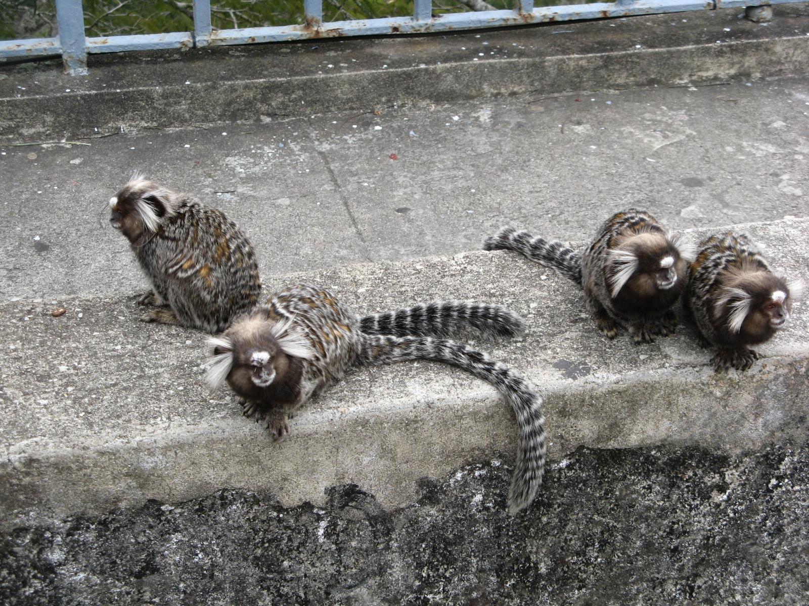 2016里约热内卢矢量图小动物