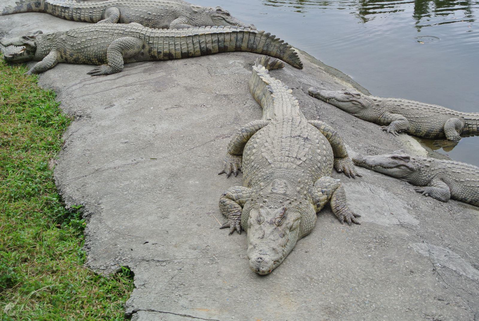 长隆5日2晚跟团游·长隆野生动物园+欢乐世界+鳄鱼