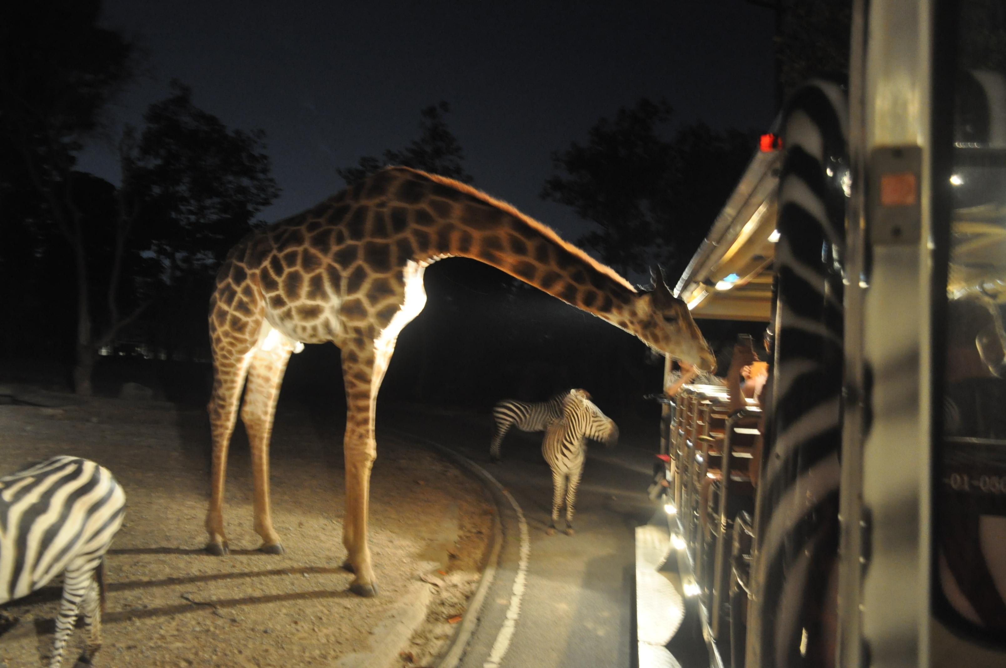 清迈夜间动物园