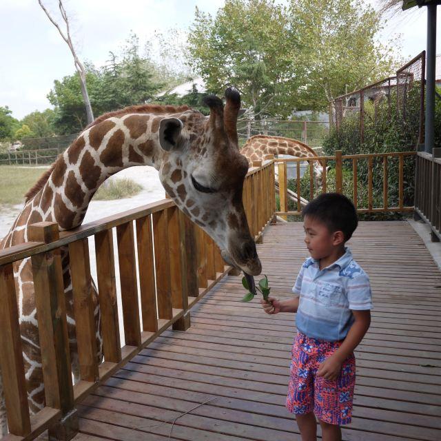 才能真正感受野生动物园