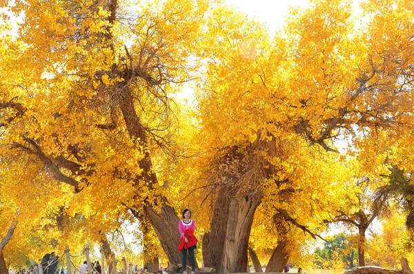 胡杨是一个神奇的树种,它的生长总是和凤凰与鲜血紧密相连。这是一个多变的树种,春夏为绿色,深秋为黄色,冬天为红色。这是一个坚强的树种,活着三千年不死、死后三千年不倒、倒后三千年不朽 弱水河畔、居延海边是胡杨的故乡,这里的39万亩胡杨林是当今世界仅存的三处天然河道胡杨林之一。 1号中午12点钟出来沙漠,坐上预定好的14座商务车,先到阿右旗去吃了个午饭,然后一路在两旁都是戈壁的环境下开往额济纳,460km的路程一直开到晚上8点钟才到,顺利联系到预定好的住宿,房东领我们到小区,然后主要就是紧张的排队洗澡加各种数