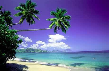 塔妙妮島  Taveuni Island   -1