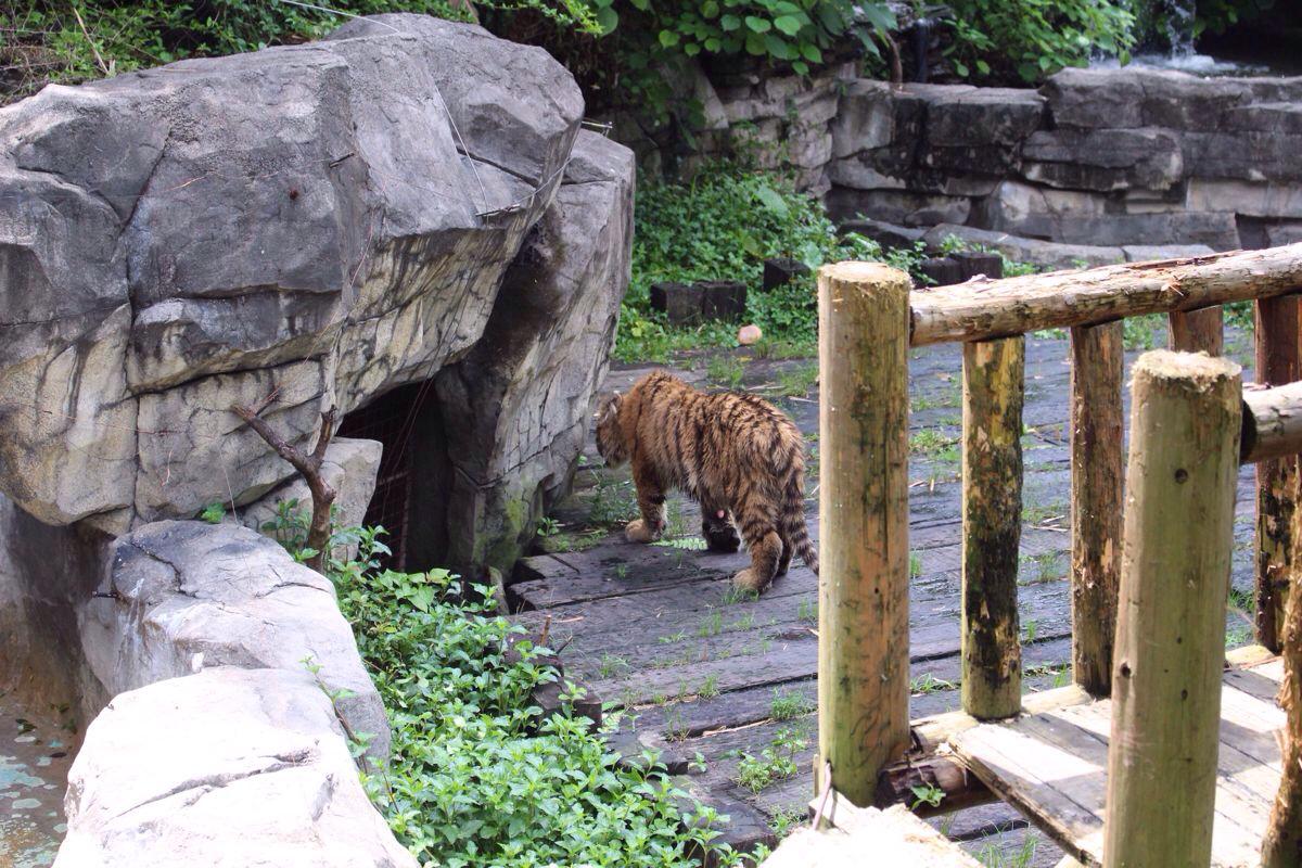 长隆酒店+大马戏+野生动物园