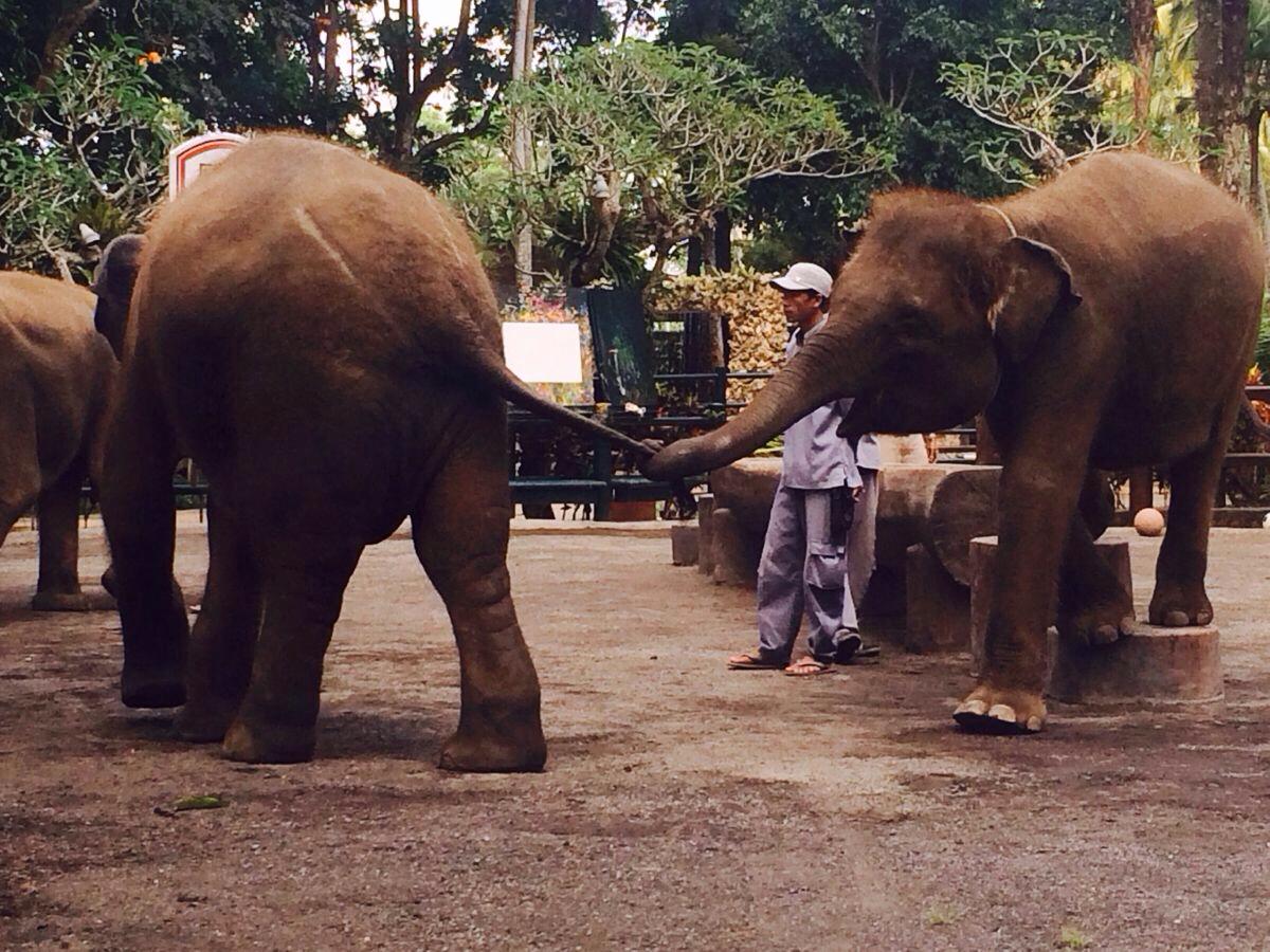 大象表演,一天三场,好可爱