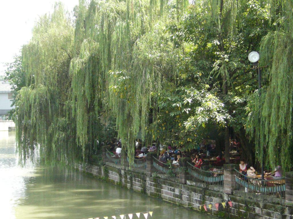壁纸 垂柳 电脑 风景 风景壁纸 柳树 摄影 树 桌面 1024_768