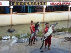 北榄鳄鱼湖动物园-Thai Ban-谁用我的昵称了