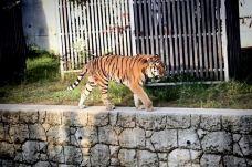 天王寺动物园-大阪-暝逝