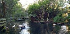 柳岸野生动物保护区-基督城-多多