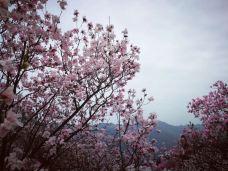 药王谷-北川-M29****6163