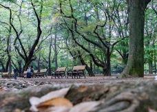 代代木公园-东京-q****ky