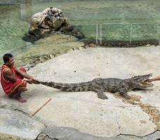 北榄鳄鱼湖动物园-Thai Ban-小小呆60