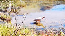 朱鹮自然保护区-洋县-随风摆动李
