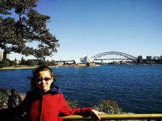 皇家植物园-悉尼-linglizi