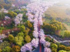 金匮公园-太湖