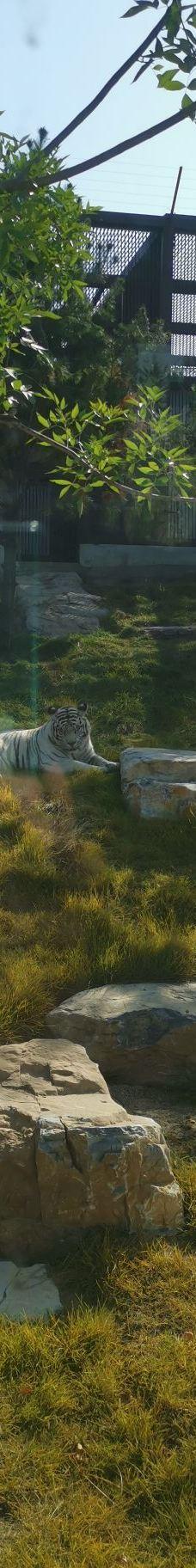 太原动物园-太原