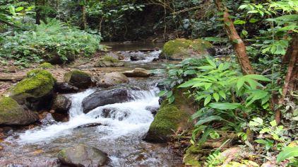 莫里热带雨林 (5)