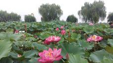 佳县特种特产养殖培育基地-佳县-滇国剑客