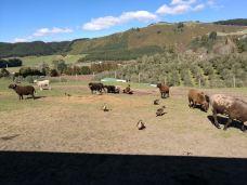 爱歌顿农场-罗托鲁瓦-梦中的纸马
