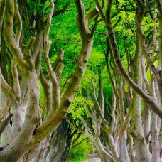 黑暗树篱-巴利马尼-__赛__