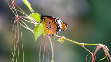 世界蝴蝶生态园 (3)