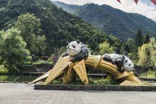 卧龙大熊猫自然保护区-汶川-doris圈圈