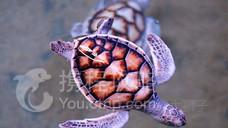 海龟孵化场