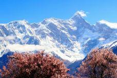 南迦巴瓦峰-米林-当地向导山川摄友岔武