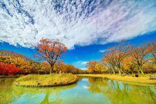 代代木公园-东京-C-IMAGE