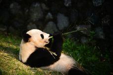 扬州动物园-扬州-AIian